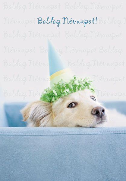 boldog névnap képeslap Kutyás képeslap boldog névnap képeslap